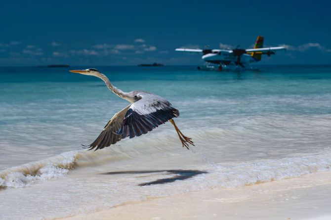 Resemblance Between Birds and Airplanes' Aerodynamics